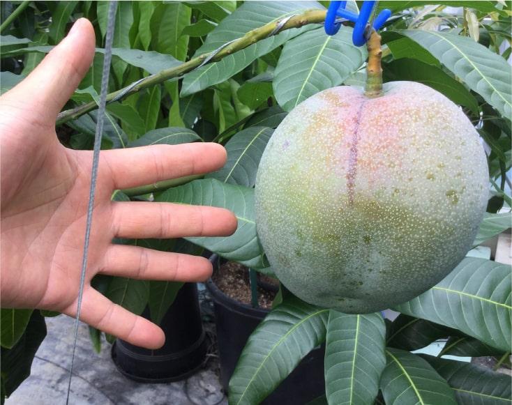 高機能性食品栽培